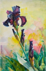 Simplicity is good, in our writing and in all aspects of our lives. Purple Iris, original watercolor by Steve Henderson.