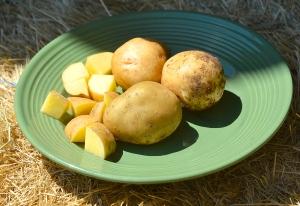 Yukon Gold potatoes. Photo courtesy Steve Henderson Fine Art.