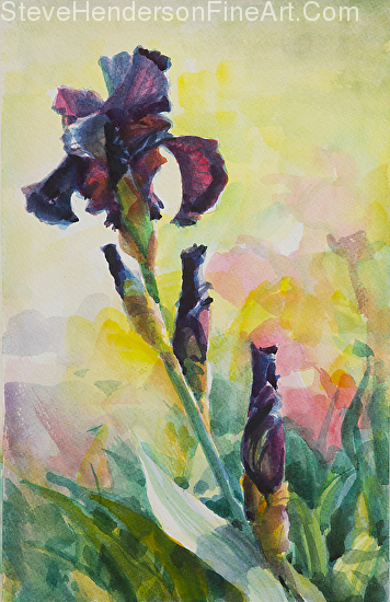 Purple Iris inspirational original watercolor of flower in meadow by Steve Henderson licensed print at Framed Canvas Art